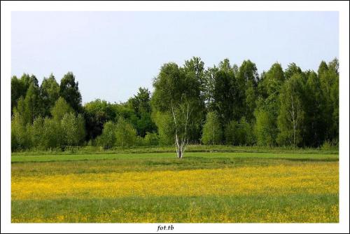 Wiosenna zieleń jest bardzo soczysta...