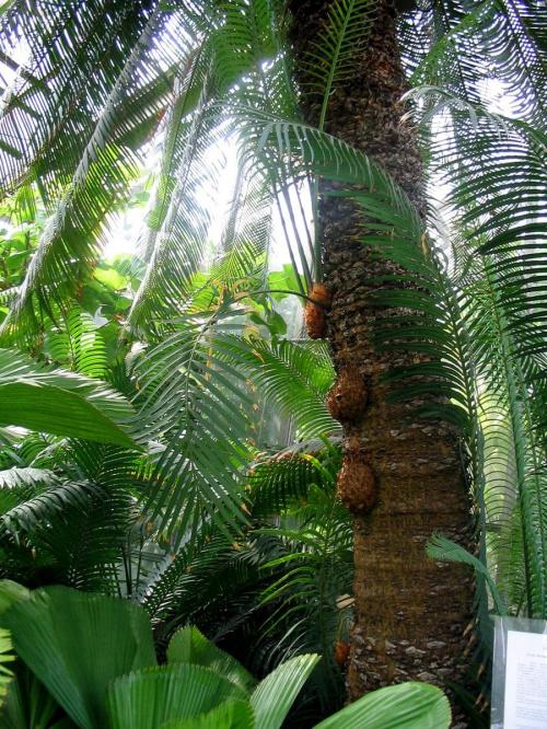 w palmiarnii