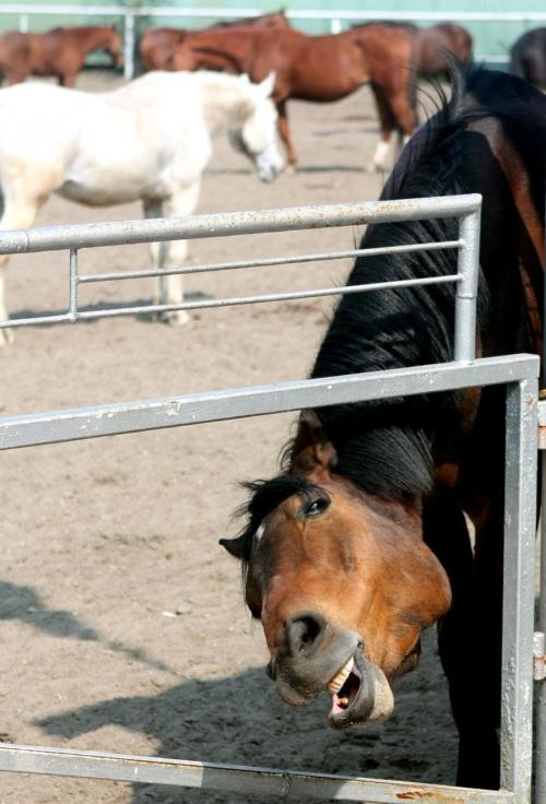 jak to mówia, koń by się... no ale chyba nie z kolegów?...