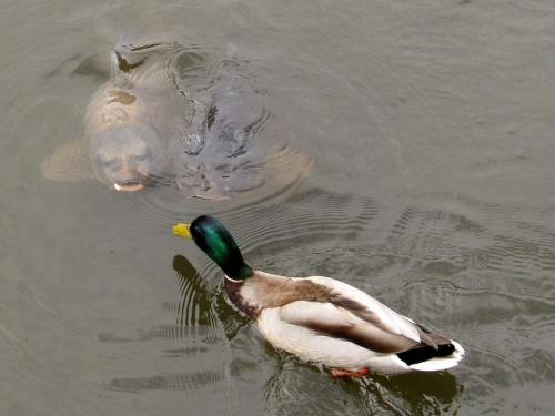ryba potrafi mieć ludzką twarz, a człowiek nie zawsze :P