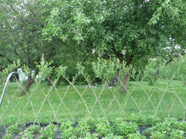 Zielono Zakręceni żywe Altany Ogrodowe 11