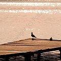 chwile przed zachodem... #fotoel #woda #molo #jezioro