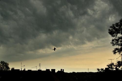 ucieczka przed burzą #niebo #chmury #ptak