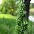 Ludzie wierzą, że aby osiągnąć sukces trzeba wstawać rano. Otóż nie - trzeba wstawać w dobrym humorze. (Marcel Achard) ************* udanego weekendu życzę odwiedzającym, ja na kilka dni zmykam ... :)) #trawy #łąka #wiosna #maj