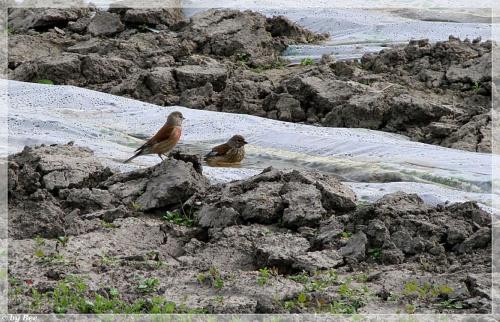 ptasia kąpiel ... #ptaki