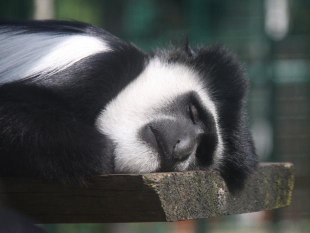 słodki sen:) #sen