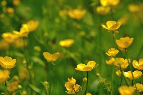 #kwiaty #łąka