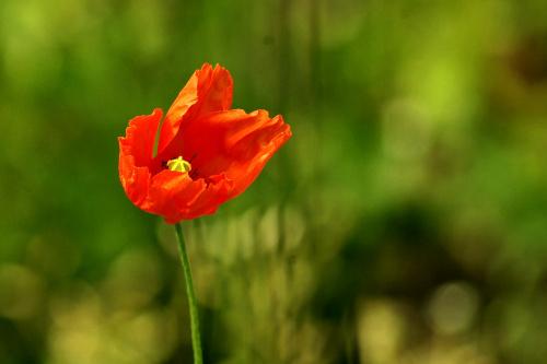 #kwiaty #MakPolny
