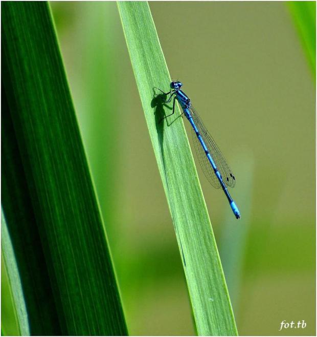 Niebieska..;)