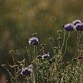 #łąka #trawy