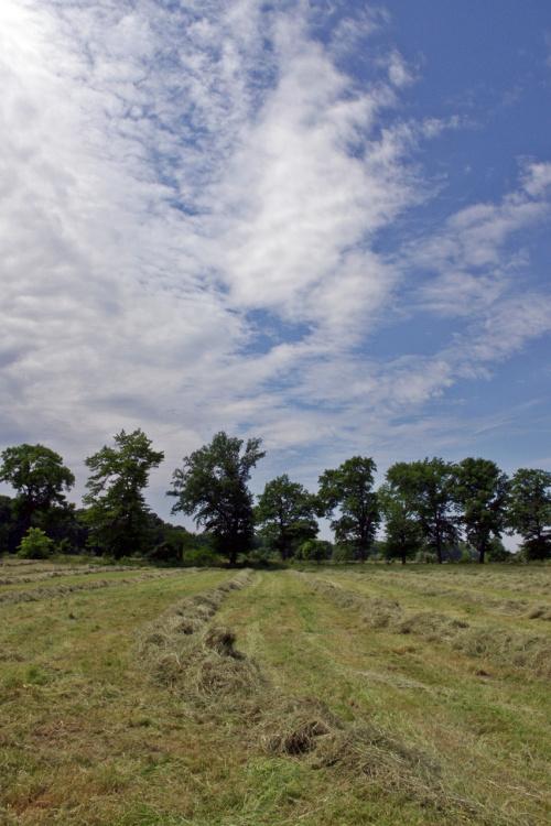 #łąka #sianokosy #niebo #drzewa #krajobraz