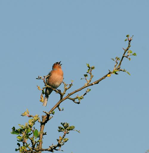 chyba kos:)?bo wygwizdywal swoja melodie mod moim oknem juz od rana:)) #natura #ptaki