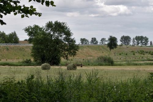 #łąka #sianokosy