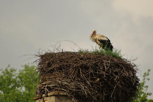 #gniazdo #bocian #ptaki