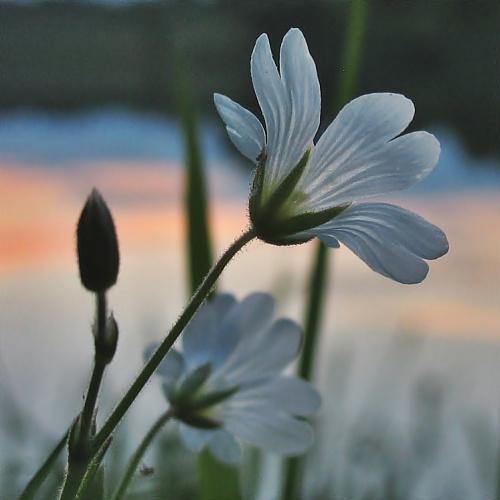 #zalew #kwiaty