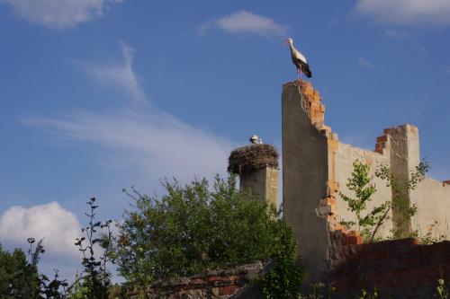 rodzicielski nadzór #gniazdo #bociany #ruiny