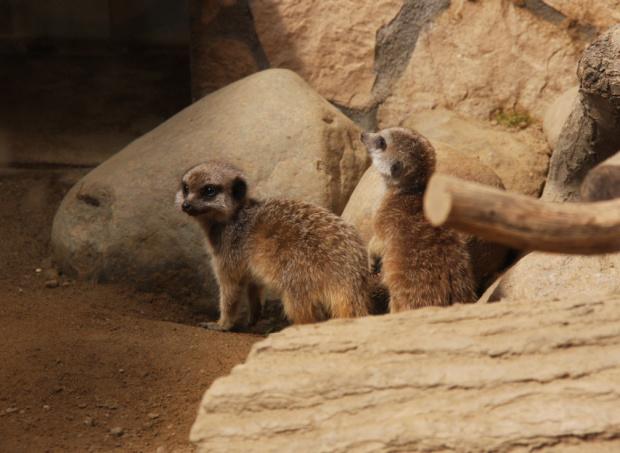 #zwierzęta #zoo
