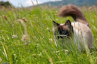 Co w trawie piszczy...? #zwierzęta #fauna #kot #natura #arietiss