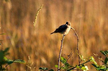 daje się dla samego dawania, a nie po to, by otrzymać coś w zamian ... (Richard Carlson) ------ wyjeżdżam na kilka dni w swoje ukochane strony ------ pozdrawiam Was wszystkich bardzo cieplutko ... :))) #ptaki #pola #przyroda #zboże