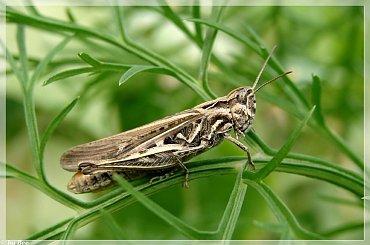 #owady #ogród #lato