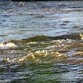 daje się dla samego dawania, a nie po to, by otrzymać coś w zamian ... (Richard Carlson) ------ wyjeżdżam na kilka dni w swoje ukochane strony ------ pozdrawiam Was wszystkich bardzo cieplutko ... :))) #woda #rzeka #Kłodnica #nurt #przyroda