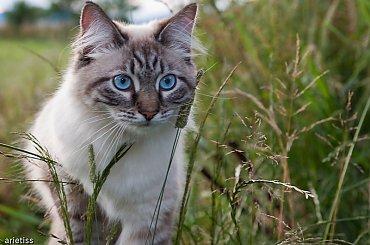Buszując w trawie... #natura #zwierzęta #fauna #kot #arietiss