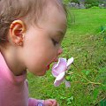 Maja wącha Różę #kwiaty #Róże #Dzieci #Maja