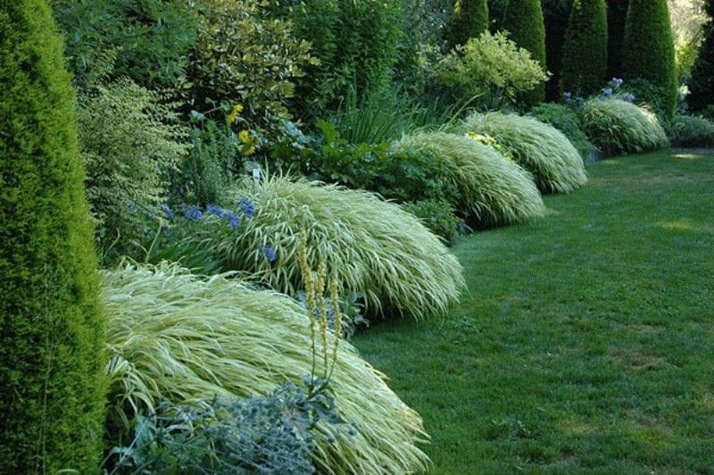 Zimozielony ogr d trawa japo ska hakonechloa macra aureola for Tall ornamental grasses for shaded areas