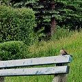 #wróbel #ptak #ławka