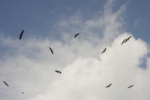 #ptaki #bociany