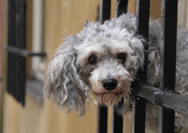 wyjść czy nie wyjść??:) #pies #zwierzęta