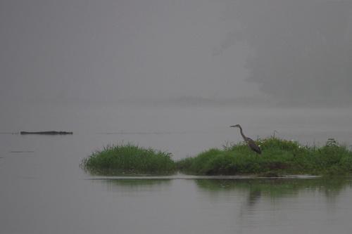 we mgle #Odra #ptaki #rzeka #mgła #rano