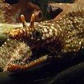 Sea Life Knigswinter #SeaLife #Knigswinter #Niemcy #NRW #ryby #raki #plazy