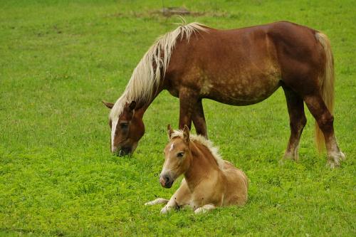 #konie