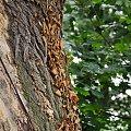 #drzewa #pnącze