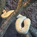 Chorzowskie zoo #wąż #zoo #chorzów