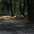Chorzowskie zoo #sarna #zoo #chorzów