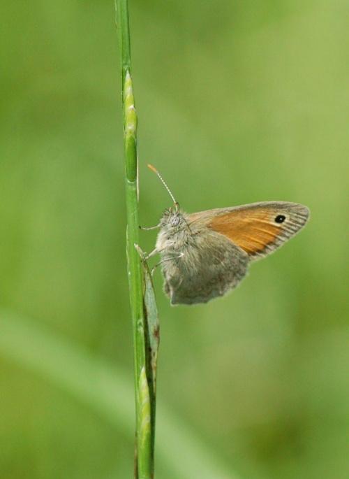 pożegnalny motylek... wyjezdzam na 10 dni jak wroce podziele sie fotograficznymi wspomnieniami:)