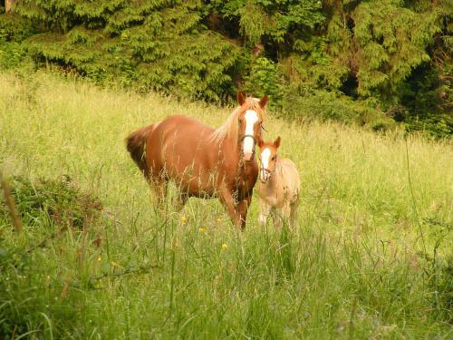 spotkanie.. #koń #źrebak #las #spotkanie