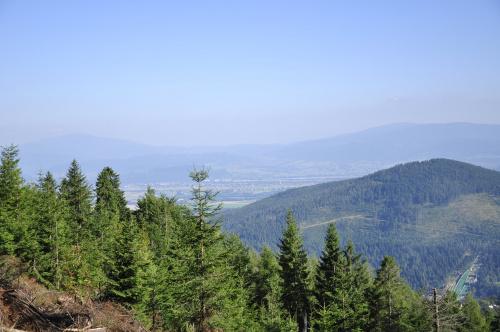 Szczyrk #szczyrk #góry #drzewa #las