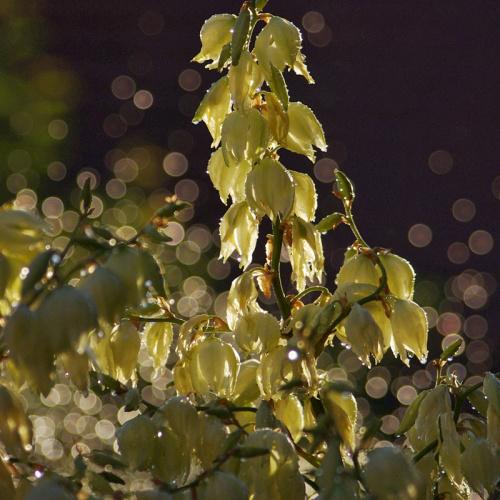 orzeźwiający przerywnik :) #natura #kwiaty #ogród