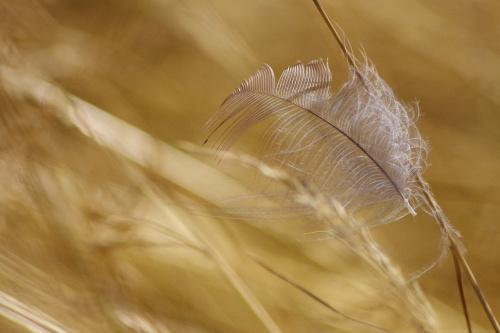 #piórko #trawy #natura