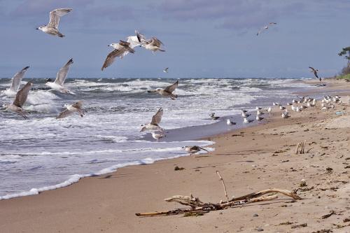 #morze #Bałtyk #plaża #ptaki #mewy