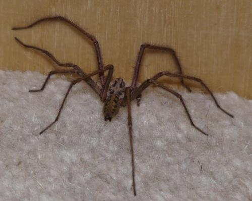 Pająk #pająki #owady