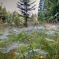 Pajęcza kraina... #łąka #natura #las #pajęczyna #arietiss