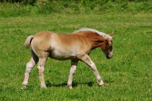 #zwierzęta #konie #łąka