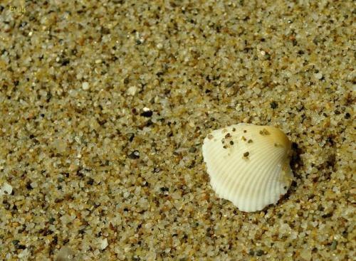 A mnie jest szkoda lata... #morze #MorzeCzarne #plaża #muszelka #piasek