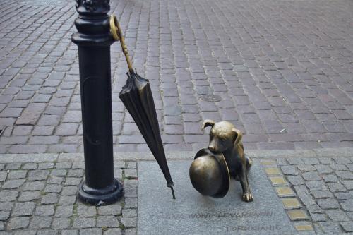 #Toruń #Filuś #pies #kapelusz #parasol