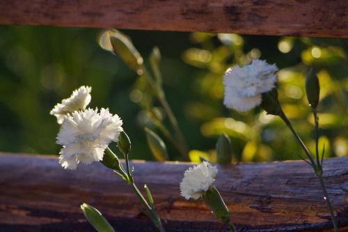 to jeszcze lato :) #kwiaty