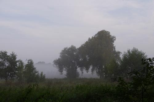 #mgła #łąka #drzewa